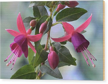 Wood Print featuring the photograph Pink And Purple Fuchsia by Terence Davis
