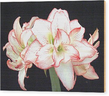 Pink And White Amaryllis Group Wood Print by Frederic Kohli