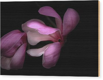 Pink And White Magnolia In Silhouette Wood Print by Joni Eskridge