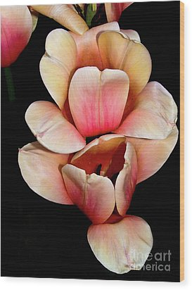 Pink And Yellow Tulips Wood Print