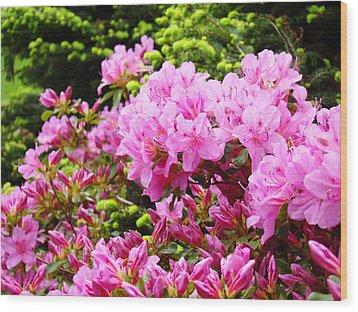 Pink Azalea Flowers Landscape 11 Art Prints Canvas Artwork Framed Art Cards Wood Print by Baslee Troutman