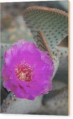Wood Print featuring the photograph Pink Beavertail Cactus  by Saija Lehtonen