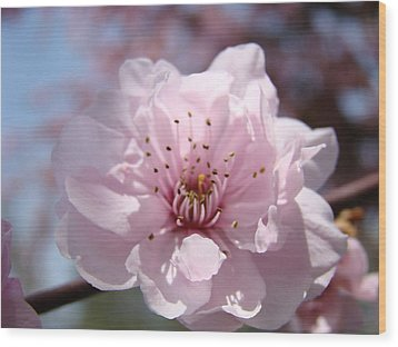 Pink Blossom Nature Art Prints 34 Tree Blossoms Spring Nature Art Wood Print by Baslee Troutman