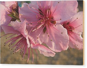 Pink Blossoms Wood Print by Barbara Yearty