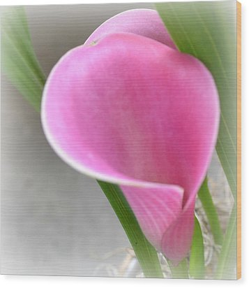 Pink Calla Lily Wood Print by P S