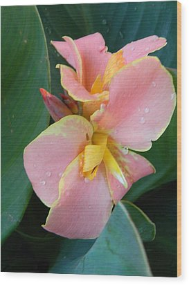 Pink Canna Lily With Raindrops Wood Print by Warren Thompson