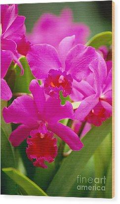 Pink Cattleya Orchids Wood Print by Allan Seiden - Printscapes