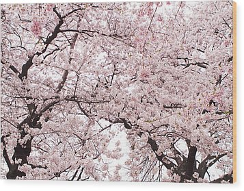 Pink Cherry Blossom Tree Wood Print by Ariane Moshayedi