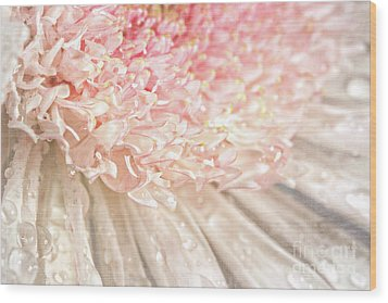 Pink Chrysanthemum With Antique Distress Wood Print by Sandra Cunningham