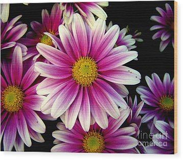 Pink Chrysanthemums Wood Print