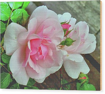 Wood Print featuring the photograph Pink Cluster Of Roses by Janette Boyd