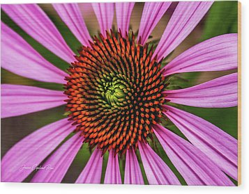 Wood Print featuring the photograph Pink Cornflower by Joann Copeland-Paul