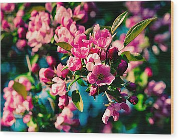 Wood Print featuring the photograph Pink Crab Apple Flowers by Alexander Senin