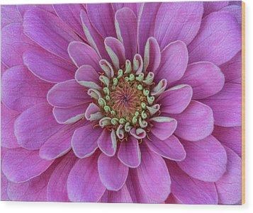 Wood Print featuring the photograph Pink Dahlia by Dale Kincaid