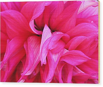 Wood Print featuring the photograph Pink Dahlia by Kristin Elmquist