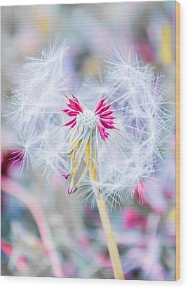 Wood Print featuring the photograph Pink Dandelion by Parker Cunningham