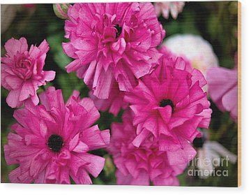 Wood Print featuring the photograph Pink by Diana Mary Sharpton