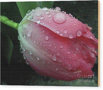 Pink Drops #2 Wood Print by Kim Tran