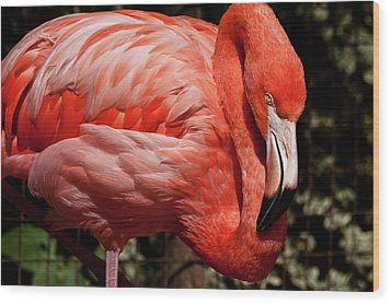 Pink Flamingo Wood Print by Jill Smith