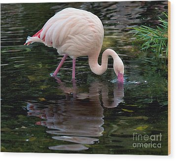Wood Print featuring the photograph Pink Flamingo by Ken Frischkorn