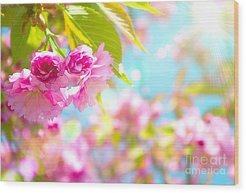 Pink  Flower Beautiful Wood Print by Boon Mee