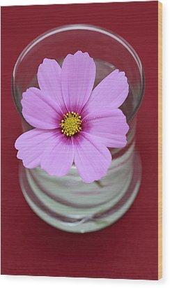 Pink Flower Wood Print by Frank Tschakert
