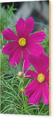 Pink Flower Wood Print by Michael Bessler