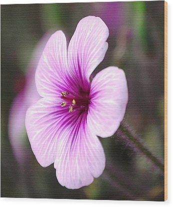 Pink Flower Wood Print by Sumoflam Photography