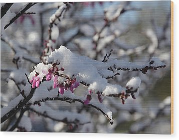 Pink Flower With Snow Wood Print