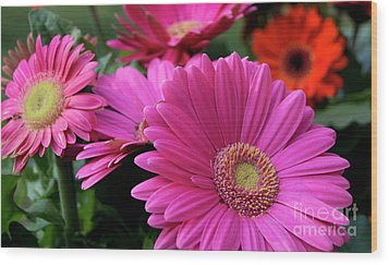Wood Print featuring the photograph Pink Flowers by Brian Jones