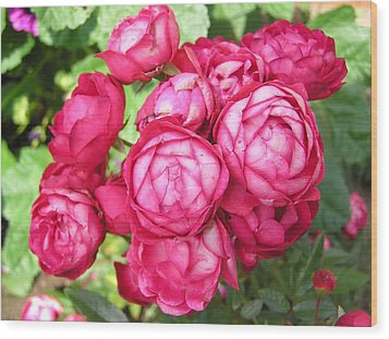 Pink Flowers Wood Print by Richard Mitchell