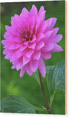 Wood Print featuring the photograph Pink Garden Flower by Juergen Roth