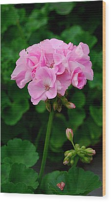 Wood Print featuring the photograph Pink Geranium by Marilynne Bull