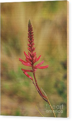Wood Print featuring the photograph Pink Glory by Deborah Benoit