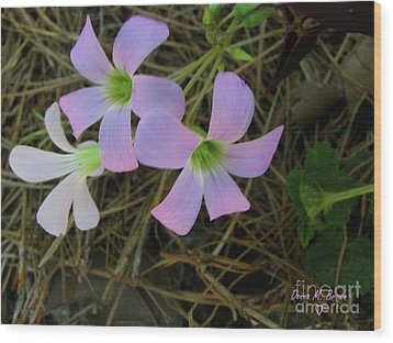 Wood Print featuring the photograph Pink Glow by Donna Brown