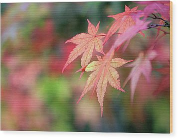 Pink Glow Maple Wood Print
