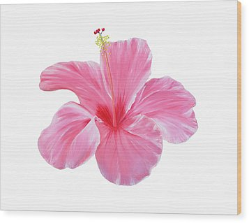 Wood Print featuring the painting Pink Hibiscus by Elizabeth Lock