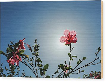 Pink Hibiscus Flowers Wood Print by Tetyana Kokhanets