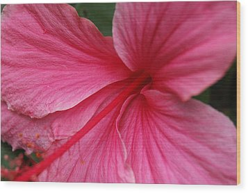 Pink Hibiscus Wood Print by Kathy Schumann