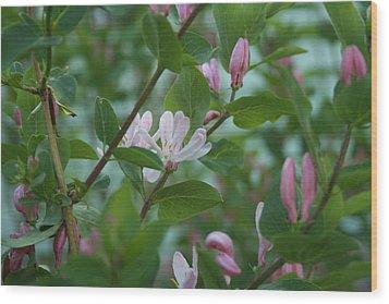 Pink Honeysuckle Wood Print by Susan Pedrini