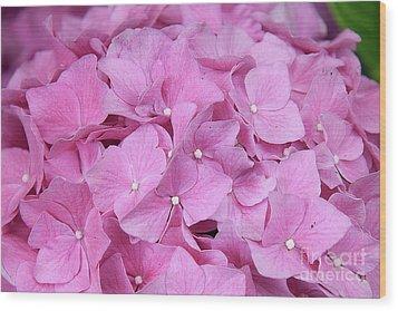 Pink Hydrangea Wood Print by Elvira Ladocki