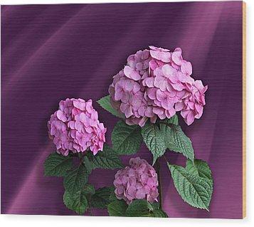 Pink Hydrangea Wood Print by Judy Johnson