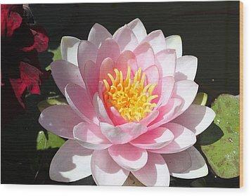 Pink Lady Wood Print by M Diane Bonaparte