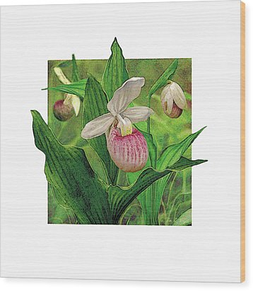 Pink Lady Slipper Wood Print by JQ Licensing