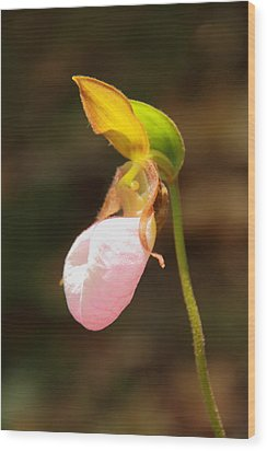 Pink Lady Slipper Wood Print by Roupen  Baker