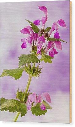 Pink Lamium Macro  Wood Print by Sandra Foster