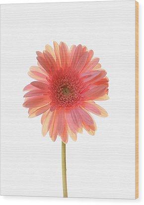 Pink Lemonade Wood Print by Amy Tyler