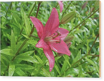 Pink Lily Flowers By Tamara Sushko  Wood Print