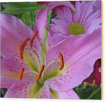 Pink Lily Wood Print by Robert Knight