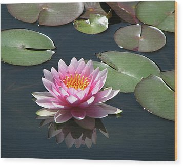Pink Lily With Reflection Wood Print